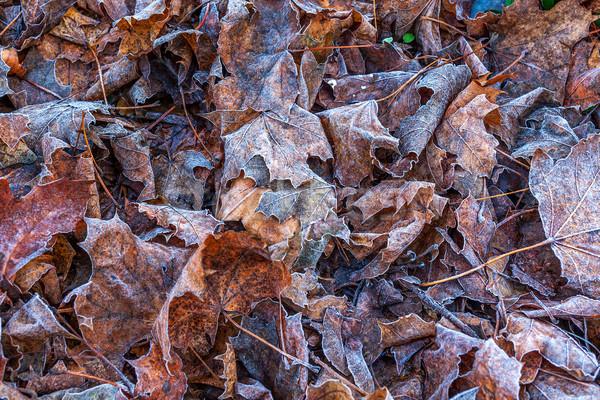 листьев землю изображение оранжевый коричневый Сток-фото © rglinsky77
