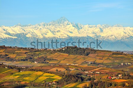 Autumnal vineyards and Alps in Piedmont, Italy. Stock photo © rglinsky77