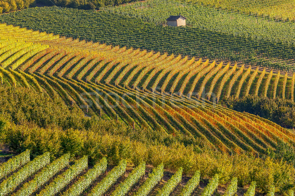 Row of autumnal vineyards. Stock photo © rglinsky77