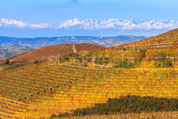Colorful vineyards on the hill in Italy. Stock photo © rglinsky77