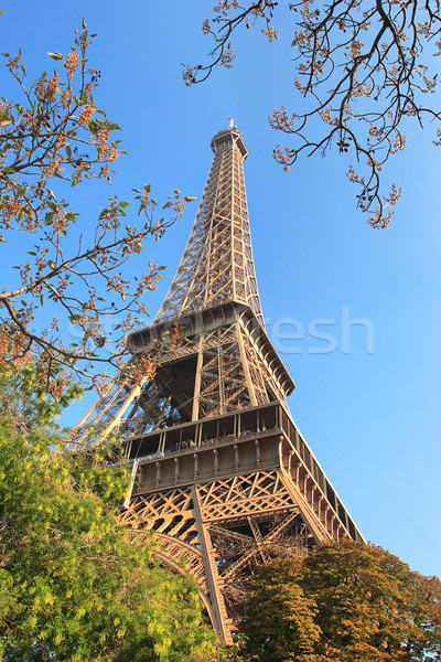 Famous Eiffel Tower in Paris, France. Stock photo © rglinsky77