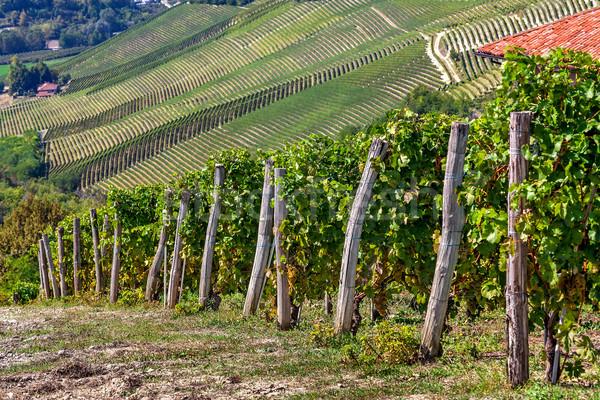 Yeşil tepeler İtalya sarmaşıklar kuzey manzara Stok fotoğraf © rglinsky77