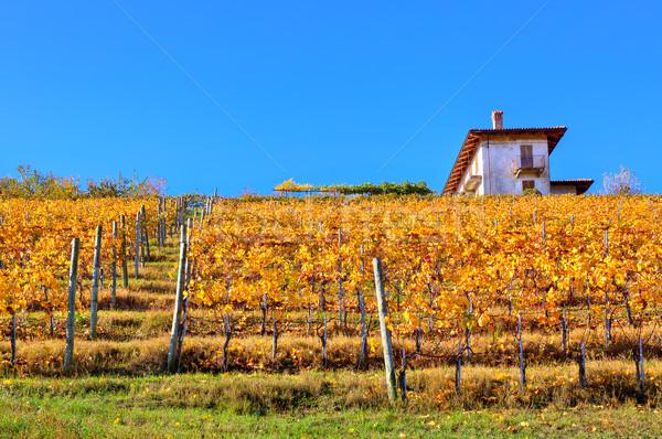 виноградник холме Италия желтый Blue Sky Сток-фото © rglinsky77