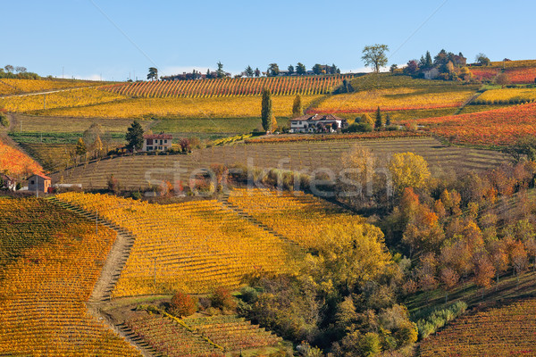 Colorful vineyards on autumnal hills of Piedmont. Stock photo © rglinsky77