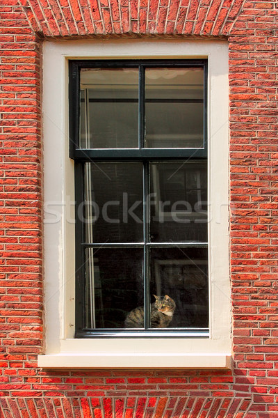 Cat on windowsill of red brick house. Stock photo © rglinsky77
