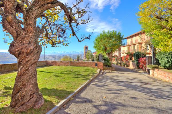 Velho árvore folhas pequeno italiano cidade Foto stock © rglinsky77