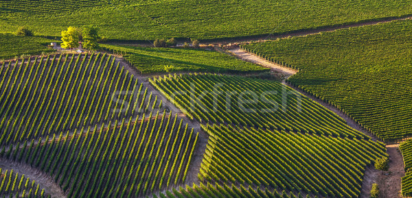 Stock fotó: Zöld · dombok · Olaszország · naplemente · északi · panoráma