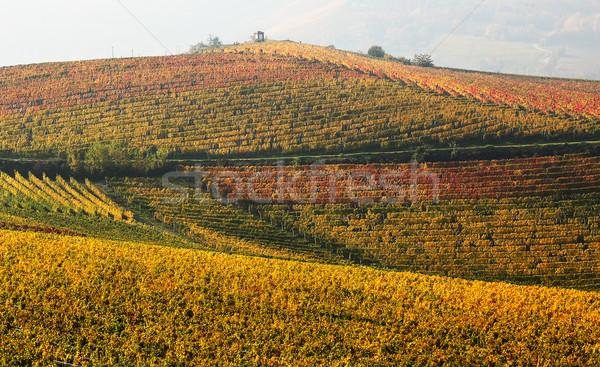 мнение Италия желтый красный листьев Сток-фото © rglinsky77