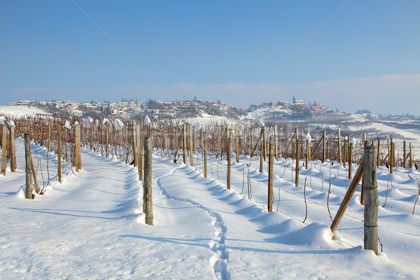Vineyards under the snow. Stock photo © rglinsky77