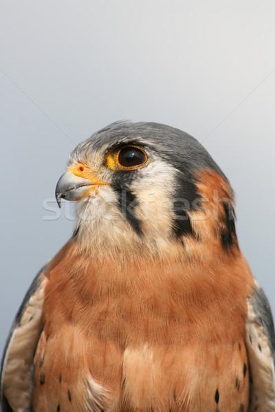 Amerikan açık kuş doğa Ekvador Stok fotoğraf © rhamm