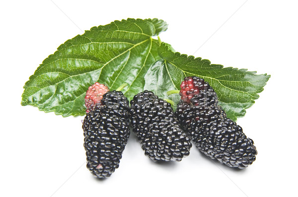 Organic Mulberry Stock photo © ribeiroantonio
