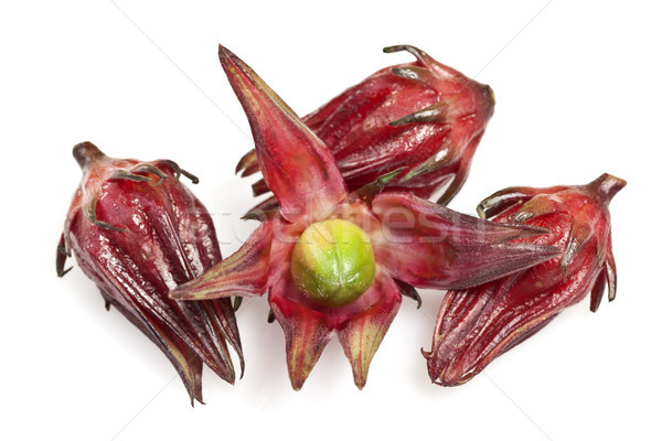 Roselle Stock photo © ribeiroantonio