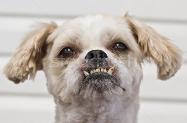 Stockfoto: Kruis · ras · eigenaardig · tanden · grappig · witte