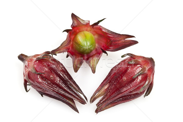Hibiszkusz gyümölcs Ausztrália fajok éves évelő Stock fotó © ribeiroantonio