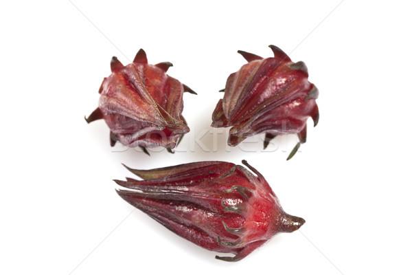 ハイビスカス フルーツ オーストラリア 種 多年生植物 ストックフォト © ribeiroantonio