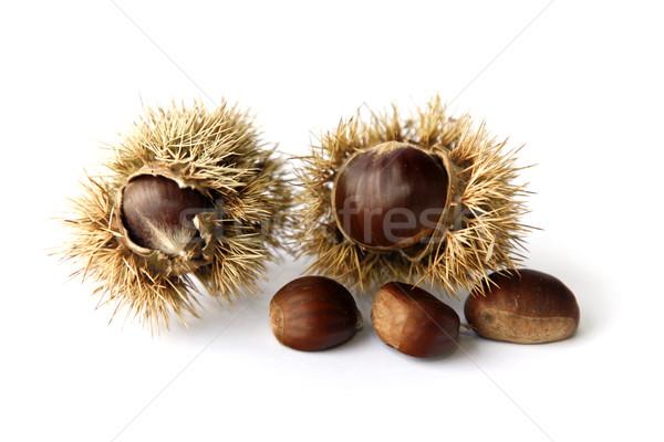 Chestnuts Stock photo © ribeiroantonio
