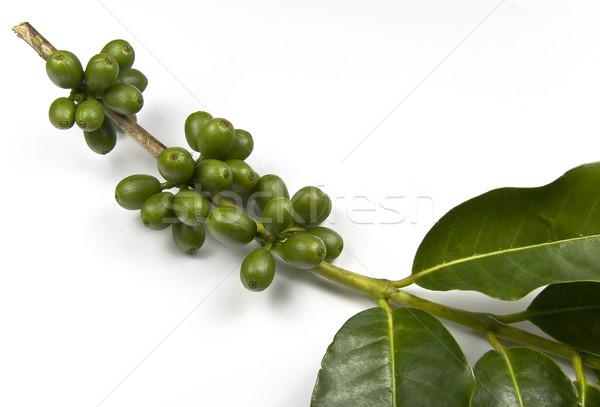 緑 コーヒー豆 コーヒー 工場 ストックフォト © ribeiroantonio