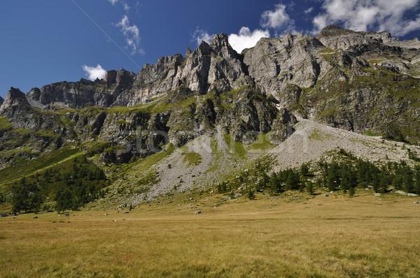 высокий горные пейзаж летнее время зеленый Альпы Сток-фото © rmarinello