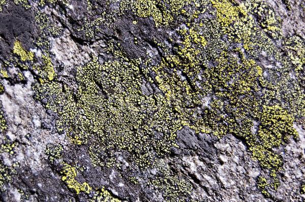 рок текстуры каменные покрытый зеленый серый Сток-фото © rmarinello