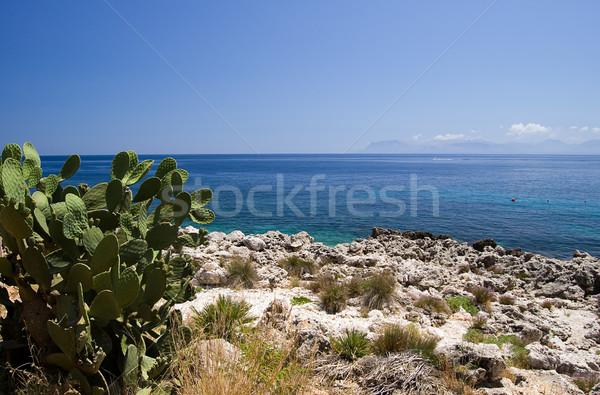 Mediterranean sea and Opuntia Stock photo © rmarinello