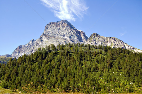 Italiano naturales parque naturaleza montana verde Foto stock © rmarinello