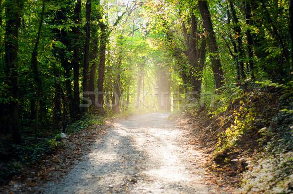 солнце каштан древесины пути начало осень Сток-фото © rmarinello