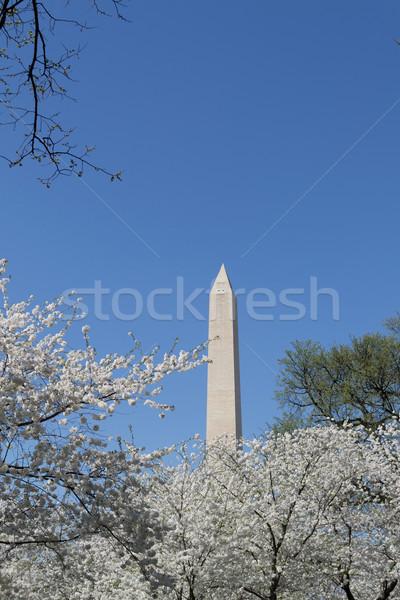 Washington Memorial with white flowers Stock photo © rmbarricarte