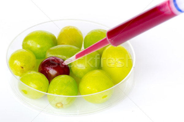 genetically modifing grapes Stock photo © rmbarricarte