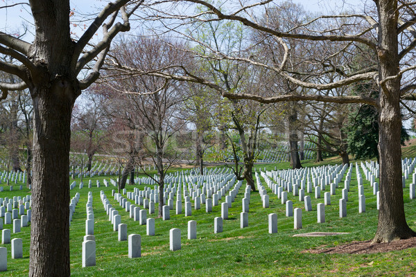 Trees at the Arlington Cemetery  Stock photo © rmbarricarte
