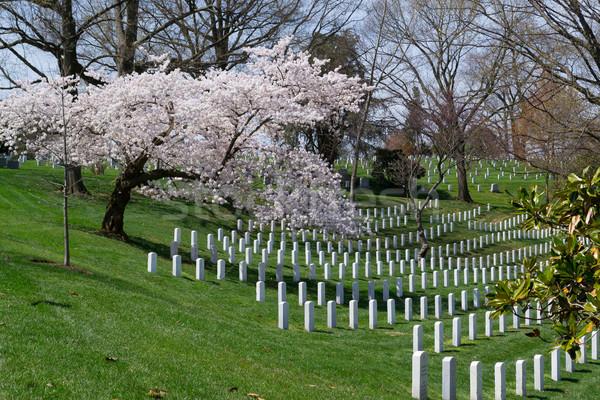 Spring coming to the Arlington Cemetery  Stock photo © rmbarricarte