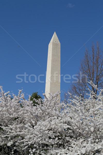 Hight of the Washington Memorial Stock photo © rmbarricarte