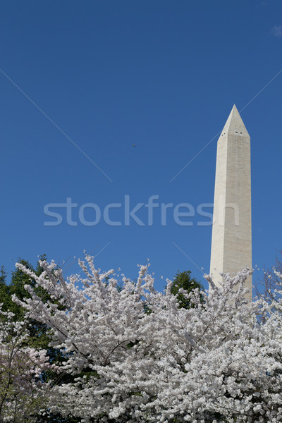 Festival and Washington Memorial Stock photo © rmbarricarte