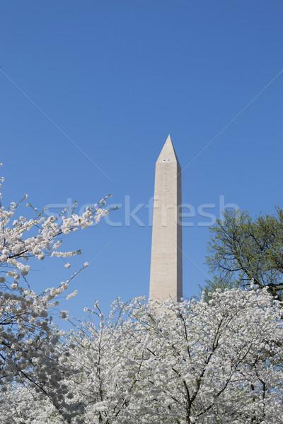 Washington meorial between flowers Stock photo © rmbarricarte