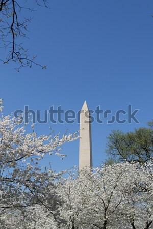 Washington Memorial during the Cherry Blosom festival Stock photo © rmbarricarte
