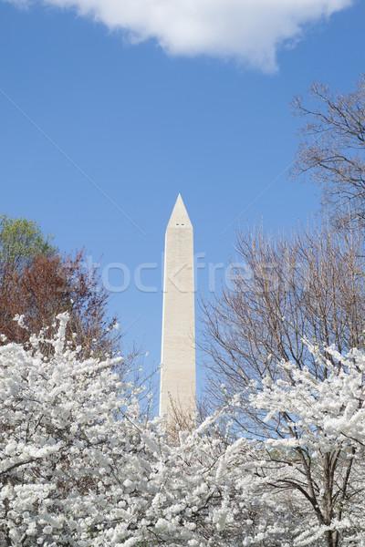 Washington memorial in spring Stock photo © rmbarricarte