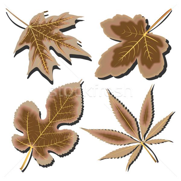 высушите листьев коллекция белый аннотация вектора Сток-фото © robertosch
