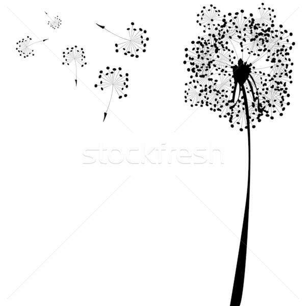 Pitypang fehér absztrakt vektor művészet illusztráció Stock fotó © robertosch