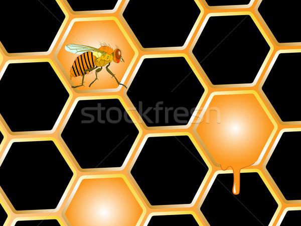 Méh háziméh méz absztrakt vektor művészet Stock fotó © robertosch