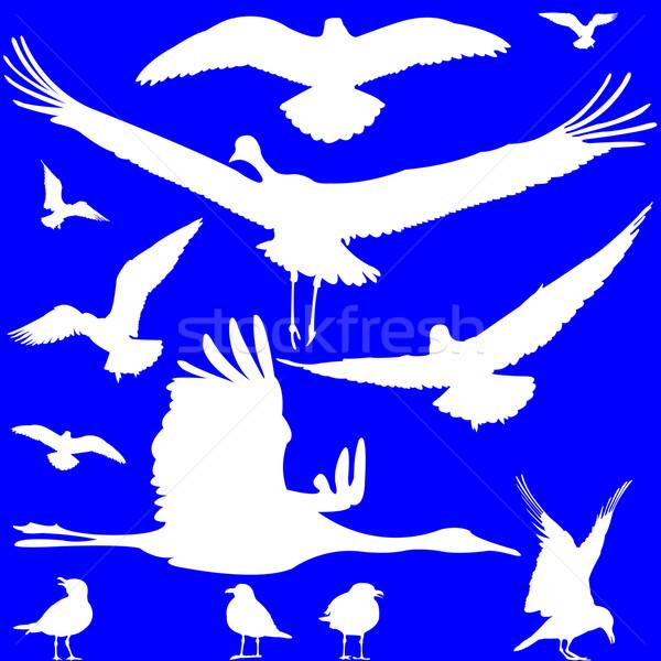 Stockfoto: Witte · vogels · silhouetten · Blauw · abstract · kunst