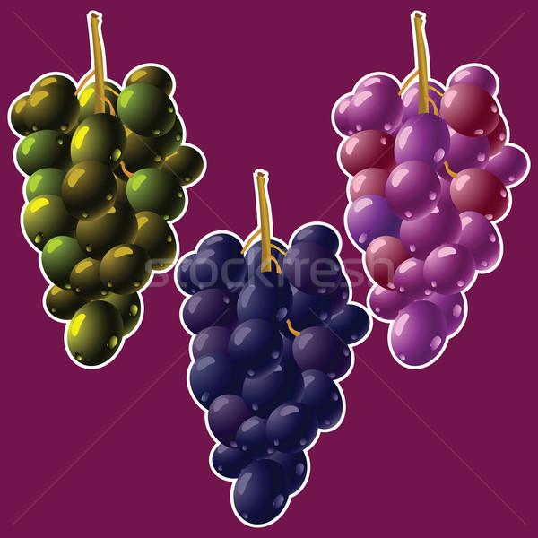 ブドウ 抽象的な ベクトル 芸術 実例 ワイン ストックフォト © robertosch