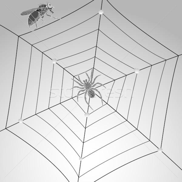 Spin vliegen web abstract vector kunst Stockfoto © robertosch