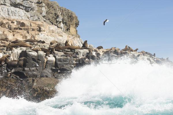 мех острове южный океана Тасмания группа Сток-фото © roboriginal