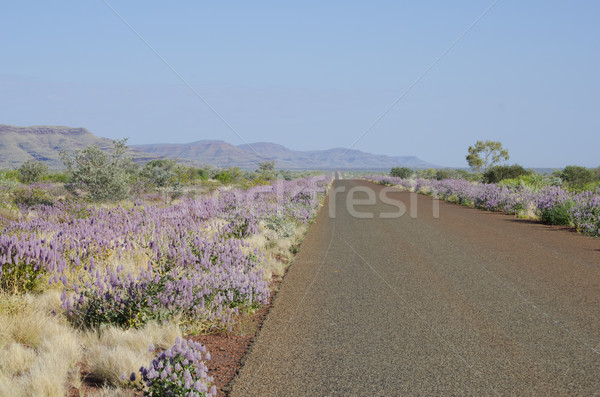 Outback  Australia, Travel Holiday Stock photo © roboriginal