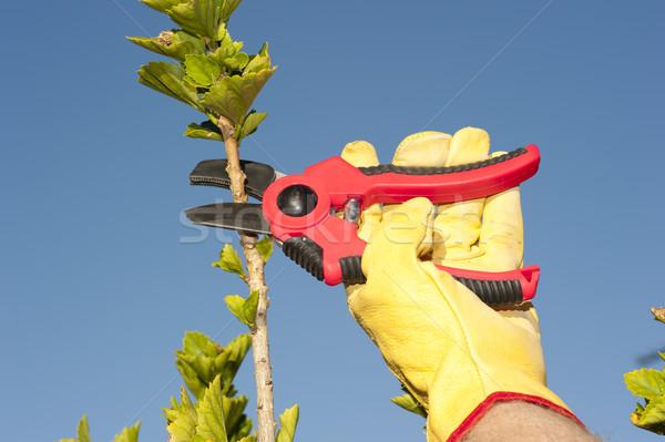 Garden work pruning tree sky background Stock photo © roboriginal