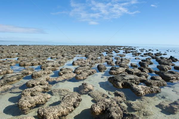 Stock photo: Stromalotites World Heritage Australia