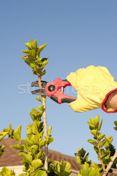 Garden work pruning bush sky background Stock photo © roboriginal