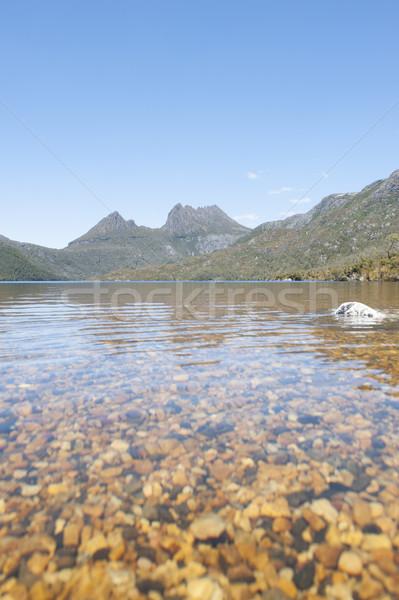 Scenic landscape Cradle Mountains Tasmania Stock photo © roboriginal