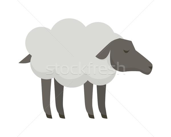 Sheep Flat Design Vector Illustration on White. Stock photo © robuart