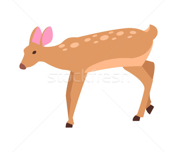 Adult Doe Isolated Vector in Cartoon Style Icon Stock photo © robuart