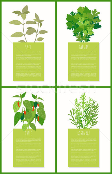 Sage Parsley Chile and Rosemary Spices Collection Stock photo © robuart